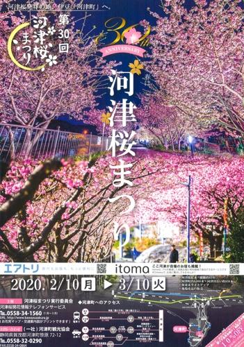 河津町発祥「河津桜まつり」原木は見応えがあります。