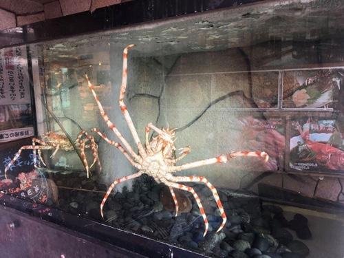 2つの日本一!伊豆名物 水揚げナンバーワンの金目鯛と、世界最大の蟹カニ タカアシガニ