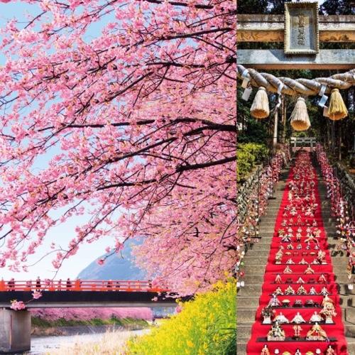 河津町の河津桜まつり・東伊豆町の雛のつるし飾りまつり・南伊豆町のみなみの桜と菜の花まつり