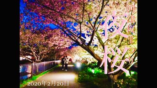 河津桜まつり。開幕!伊豆稲取発祥 日本一の雛壇飾り 雛のつるし飾りまつり